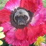 Photo #5 - Close up dog flower costume 2