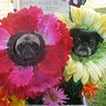 Photo #9 - Pug Flower costumes 1