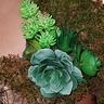Photo #7 - Succulent garden