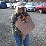 Photo #1 - Mounted Deer Trophy