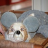 Photo #6 - Cutest mouse ever