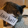 Photo #6 - Hairball (more interested in eating the string)