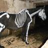 Photo #1 - Ms Bones