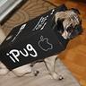 Photo #2 - Mugsey the iPug