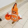 Photo #5 - Nemo