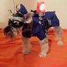 Photo #1 - Officer Dog