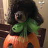 Photo #6 - Gigi the pumpkin