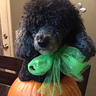 Photo #7 - Gigi the pumpkin take 2 model status