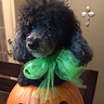 Photo #8 - Gigi pumpkin model I'm so done take 3