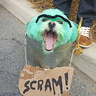 Photo #1 - Oscar the Grouch