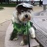 Photo #1 - Doc at the Boston Brain Tumor Walk