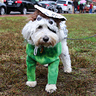 Photo #3 - Doc at the Salem Pet Parade