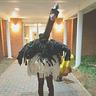 Photo #1 - Ostrich