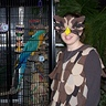 Photo #3 - These are our resident macaws, Mick and Max.  They seemed to like the costume!