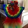 Photo #2 - Parrot