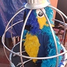 Photo #1 - Parrot in a Cage