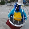 Photo #2 - Parrot in a Cage