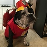Photo #1 - Marshall from Paw Patrol