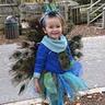 Photo #3 - Peacock