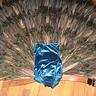 Photo #4 - Peacock