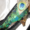 Photo #5 - Peacock Showgirl  - Shoes 3