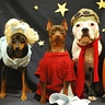 Photo #3 - Upclose of dog costumes