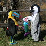 Photo #2 - Penguin and Toucan