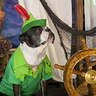 Photo #1 - Peter Pan Boston Style