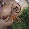 Photo #5 - Sphinx moth detail of Orchid Costume