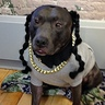 Photo #2 - Snoop Dog