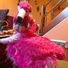 Photo #1 - Pink Flamingo Baby