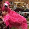 Photo #4 - Pink Flamingo Baby