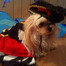 Photo #1 - Katie the Shih Tzu - 1