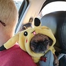 Photo #5 - Pokemon