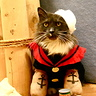 Photo #2 - Popeye the Sailor Kitty