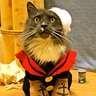 Photo #3 - Popeye the Sailor Kitty