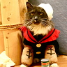 Photo #1 - Popeye the Sailor Cat