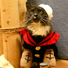 Photo #2 - Popeye the Sailor Cat