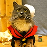 Photo #3 - Popeye the Sailor Cat