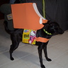 Photo #1 - Vista with Pupsicle costume on