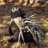 Photo #2 - Porcupine