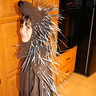 Photo #3 - Side view of porcupine