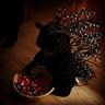 Photo #2 - Porcupine