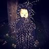 Photo #5 - Porcupine