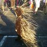 Photo #1 - My little porcupine