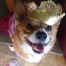 Photo #2 - Pretty portly Princess corgi
