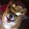 Photo #3 - Happy portly Princess corgi