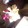 Photo #7 - Lippy portly Princess corgi