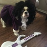 Photo #1 - Prince Dog
