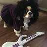 Photo #2 - Prince Dog